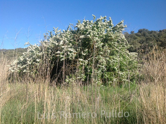 2014IMG_1400_flora