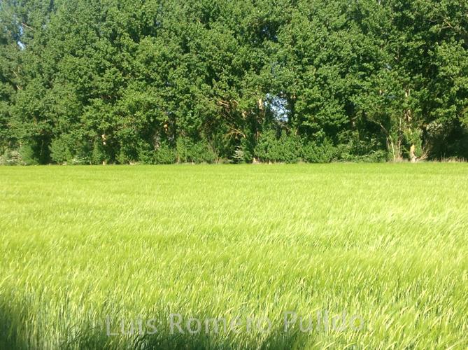 2014IMG_1412_flora